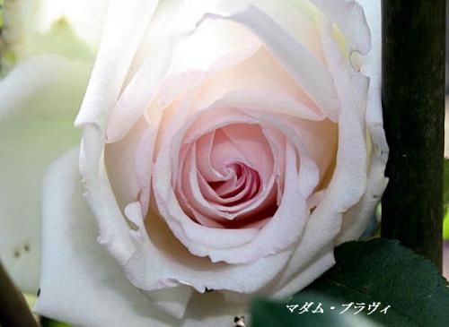 IMG_0387.jpg