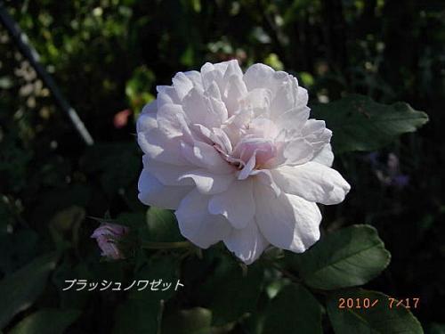 R0013220.jpg