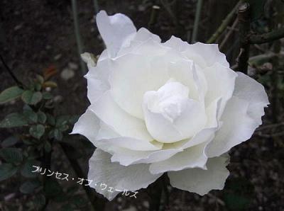 R0013597.jpg
