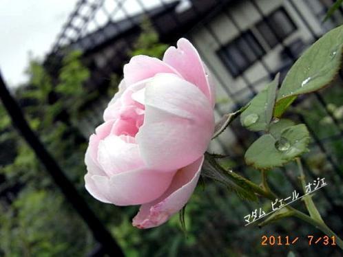 R0015044.jpg