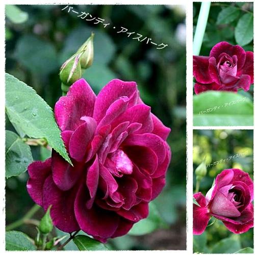 page_20100523115610.jpg