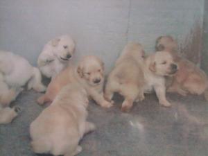エルザ子犬3