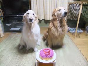 ケーキとバニラ