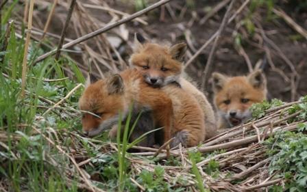 fox63