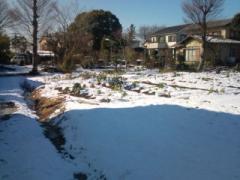 雪に埋もれる菜園