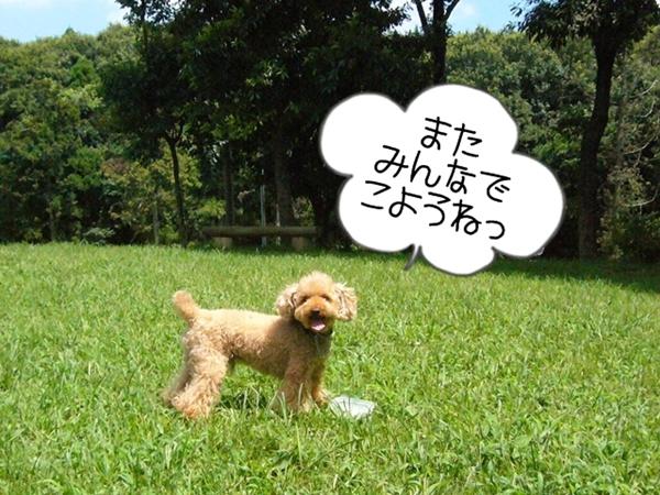2010_0804_125610-P1030566-crop.jpg