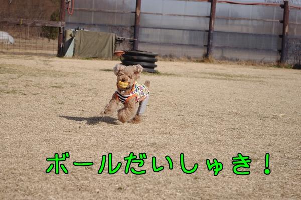 IMGP0711.jpg