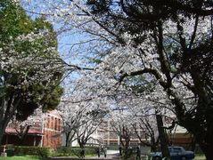 kumamoto1.jpg
