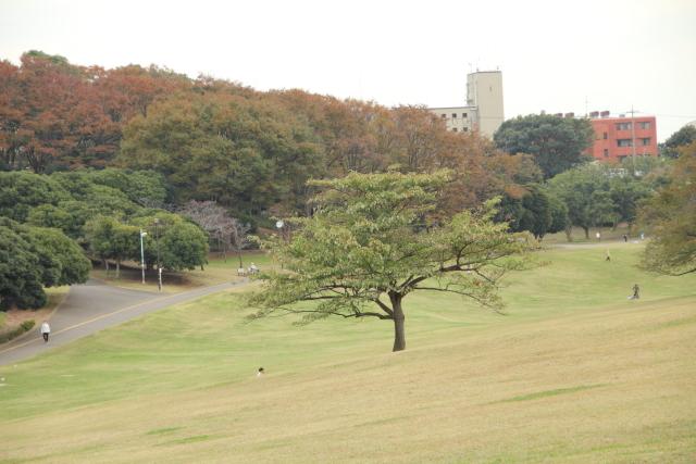 20111110_0006.jpg