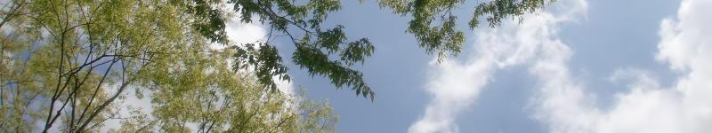 笠間の新緑と青空