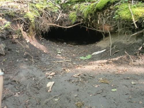 ヒグマの穴