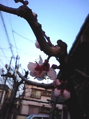 MA340066_20100314221433.jpg