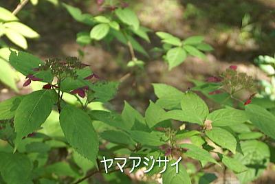 0919-4八ケ岳倶楽部