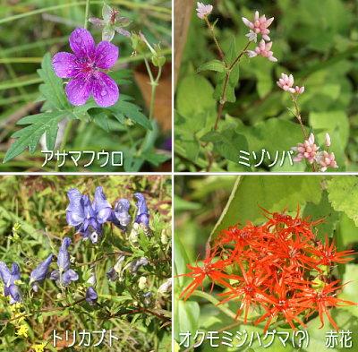 0919-2八ケ岳自然文化園