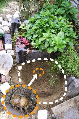 1019-7花壇作り