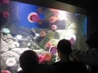 水族館11