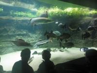 水族館22