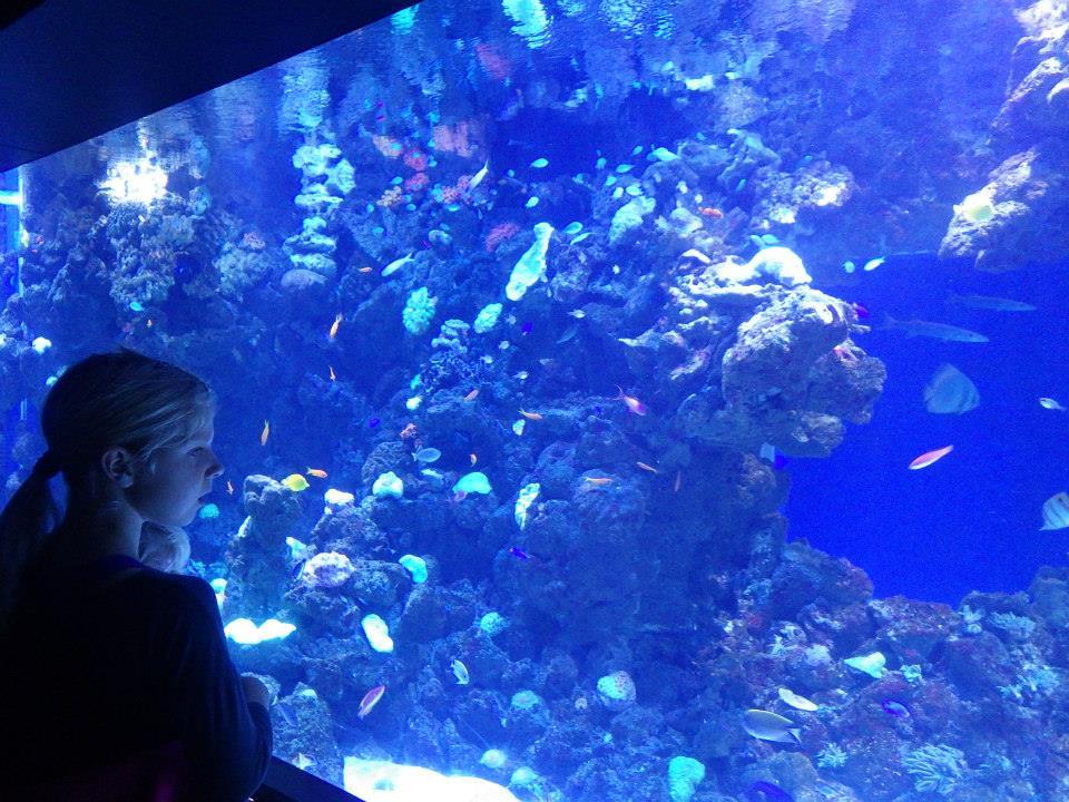 水族館24