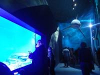 水族館26
