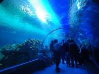 水族館27