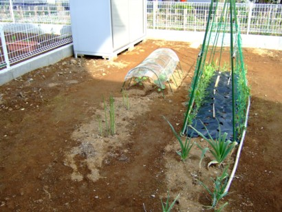 2010 春の畑