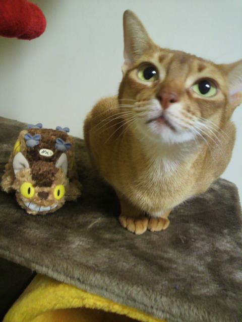 猫バスドレミ