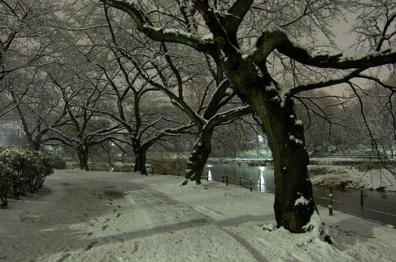 雪の下池4