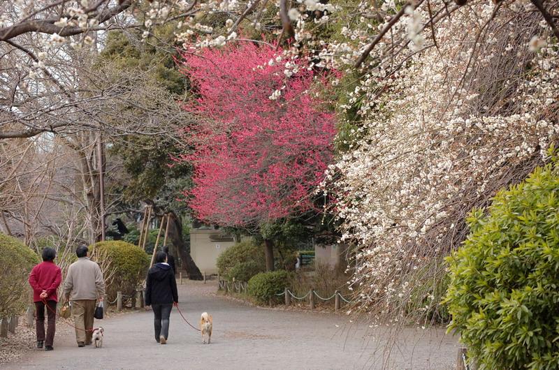 梅の咲く遊歩道