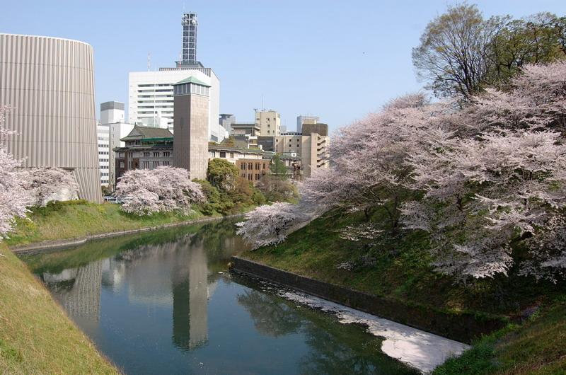 牛ヶ渕桜1