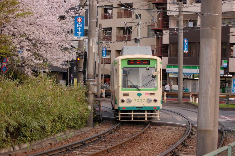 都電荒川線と桜4