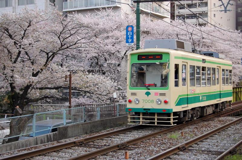 都電荒川線と桜5
