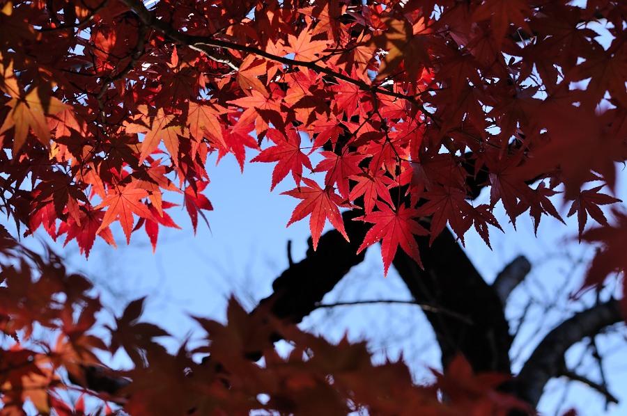 昭和記念公園__08