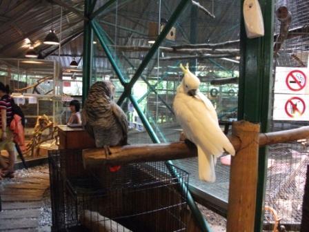 KLタワー動物園
