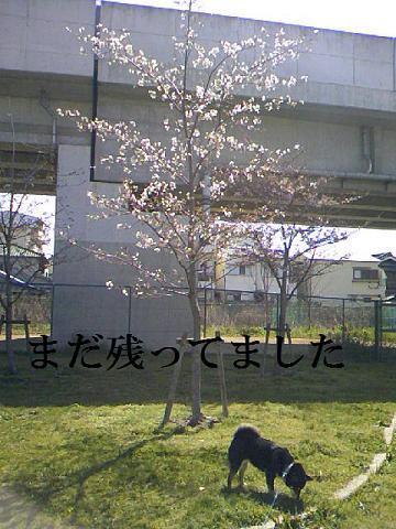 DCF_0002_20100424011116.jpg