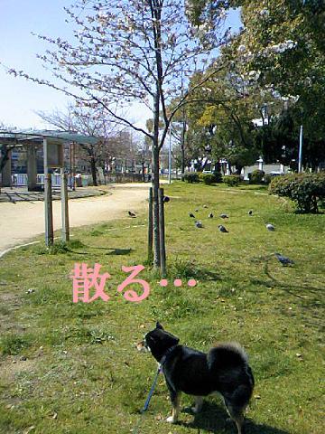 DCF_0003_20100424011117.jpg