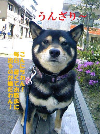 DCF_0003_20100812134653.jpg