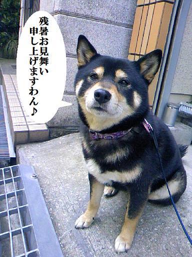 DCF_0005_20100812134653.jpg