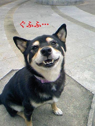 DCF_0005_20111022232555.jpg