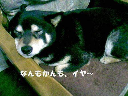 DCF_0006_20110519133301.jpg