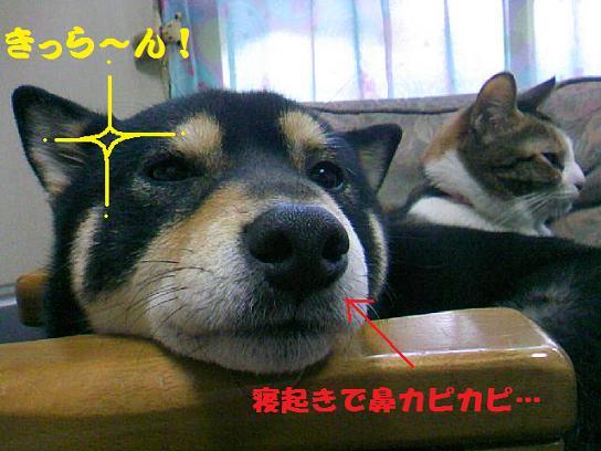 DCF_0007_20100210193852.jpg