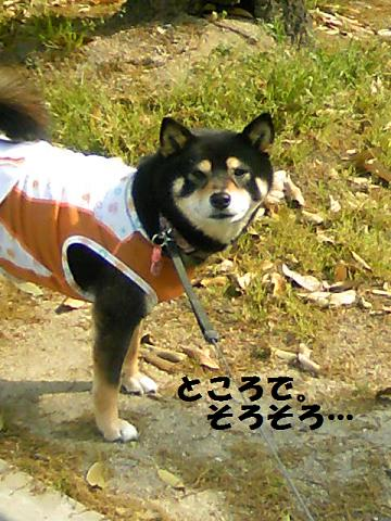 DCF_0011_20110526121424.jpg
