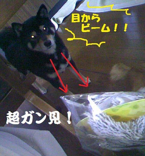 DCF_0013_20100210193237.jpg