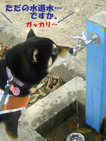 DCF_0014_20110526123335.jpg