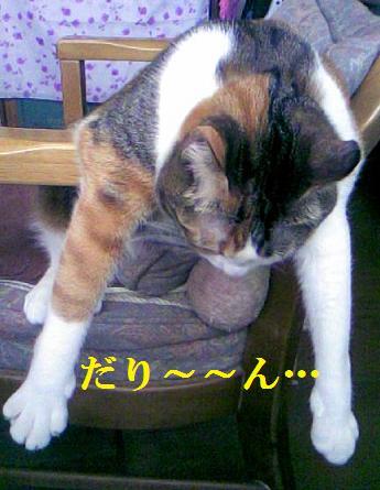 DCF_0027_20110314181933.jpg