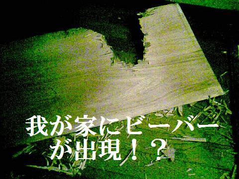 DCF_0030_20110314181927.jpg