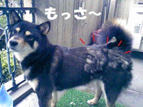 DCF_0031_20100630121940.jpg