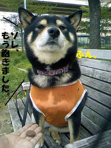 DCF_0031_20110526122133.jpg