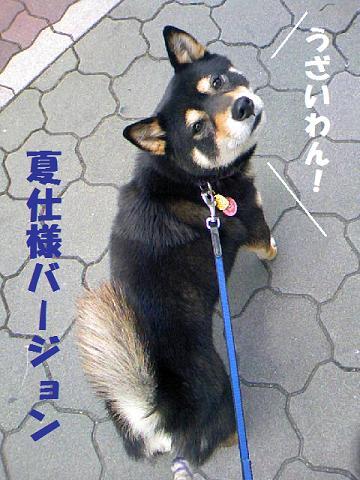 DCF_0032_20100630121939.jpg