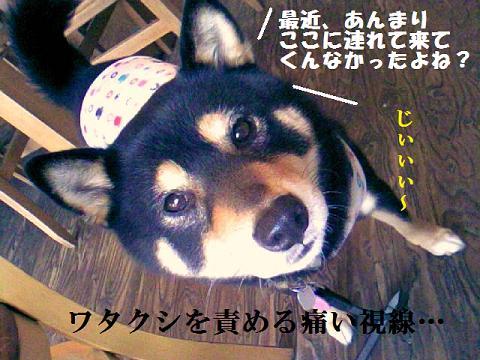 DCF_0042_20110320225942.jpg