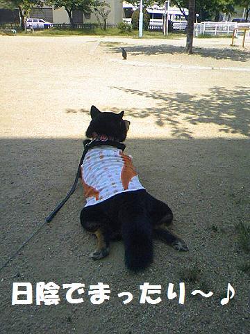 DCF_0045_20110519133811.jpg